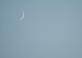 Fingernail moon