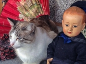 cat with doll