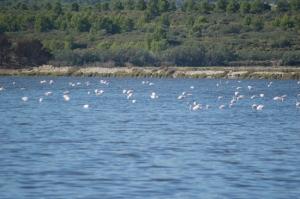 Flamingos before