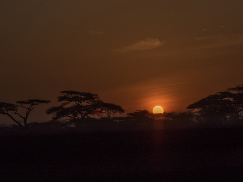 Serengeti Sunrise.jpg