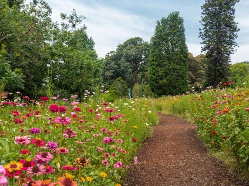 flower meadow path