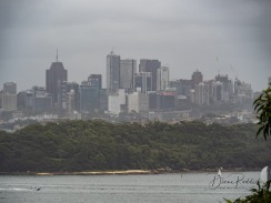 Skyline from Rose Bay