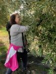 Barb Picking Olives